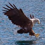 Isle of Skye – Seeadler, Old Man of Storr und Quiraing – eine wunderschöne Insel in Schottland