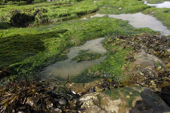 Wasser und Algen machen eine Identifikation schwierig