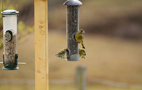 Die Vögel freuen sich über eine kostenlose Mahlzeit
