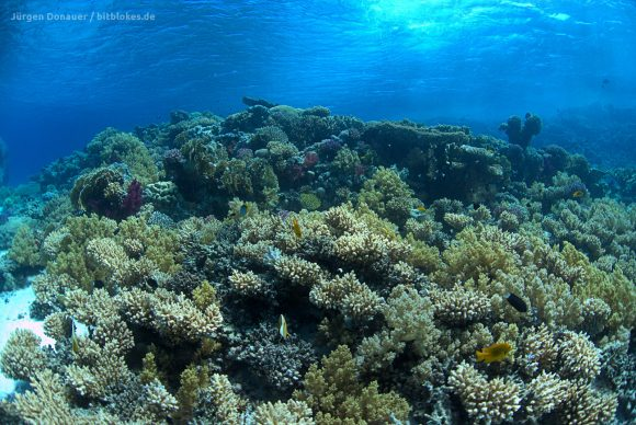 Ein unglaublich schönes und gesundes Riff