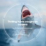 App-Empfehlung: Attenborough's Story of Life – kostenlose Wildlife Clips von BBC Earth