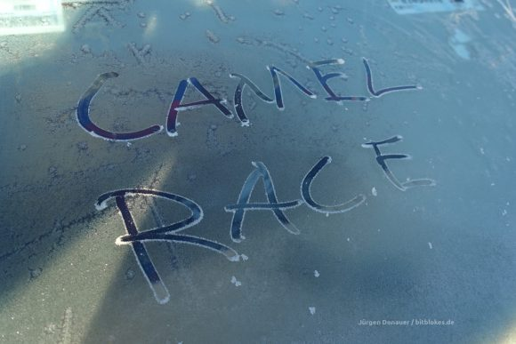 Camel Race - cold