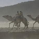 Kamelrennen 2017 im Wadi Zalaga (Sinai) zwischen Muzeina und Tarrabin