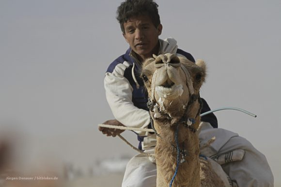 Exhausted camel and dusty rider