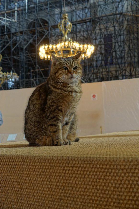Katze mit Heiligenschein in der Hagia Sofia
