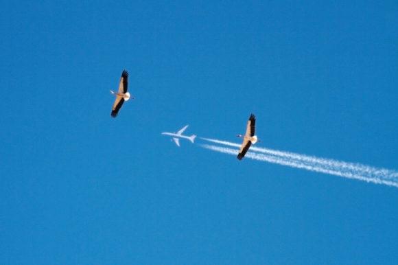 Störche und Flugzeug
