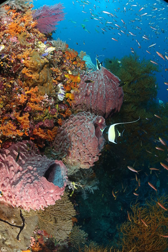Reef- Sponges and Fish