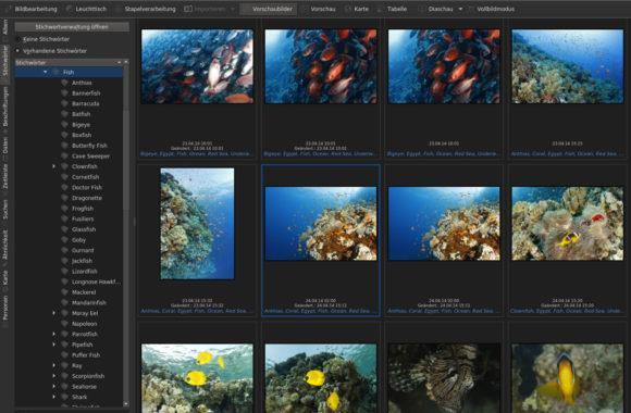 Die Fotos mit digiKam 5.9 verwalten
