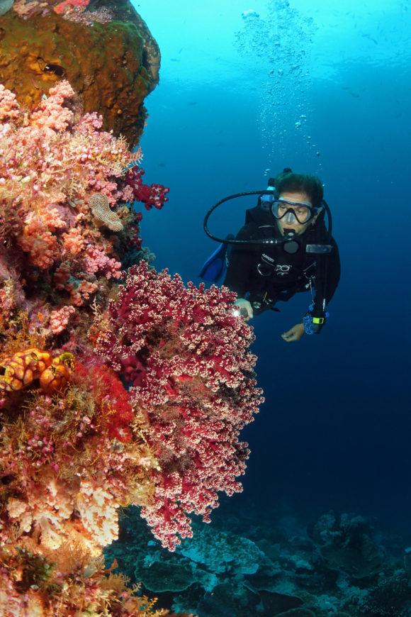 Riff und Taucherin