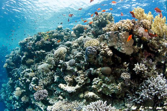 Das Rote Meer in Ägypten gehört zu den besten Tauchgebieten der Welt