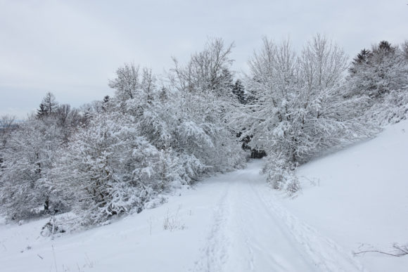 Wald im dichten Schnee